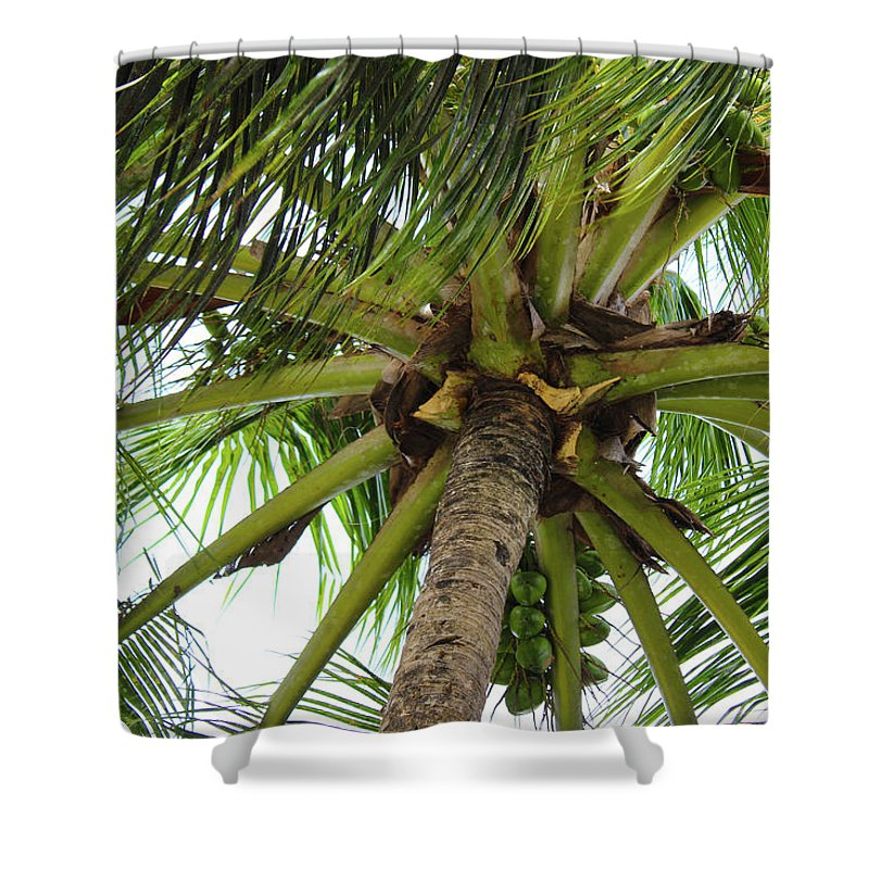 Under The Coconut Tree - Shower Curtain