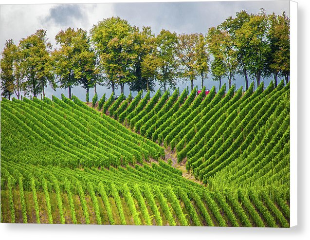 Vineyards In The Grand Duchy Of Luxembourg - Canvas Print