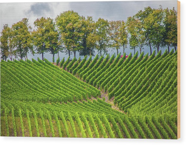 Vineyards In The Grand Duchy Of Luxembourg - Wood Print