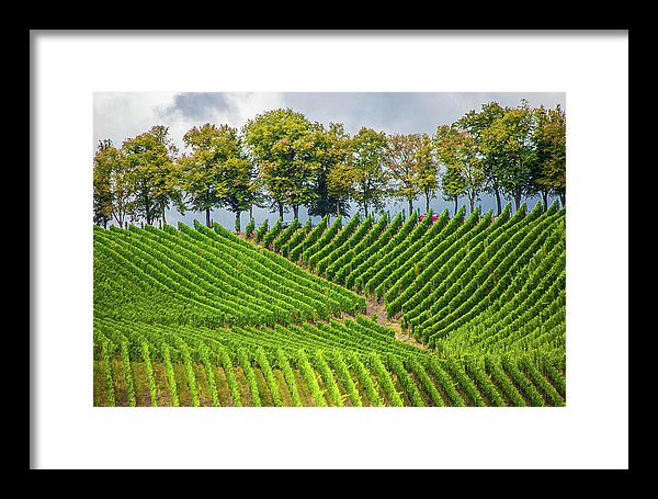 Vineyards In The Grand Duchy Of Luxembourg - Framed Print