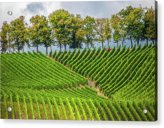 Vineyards In The Grand Duchy Of Luxembourg - Acrylic Print