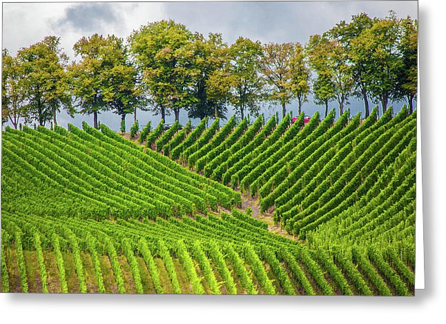 Vineyards In The Grand Duchy Of Luxembourg - Greeting Card