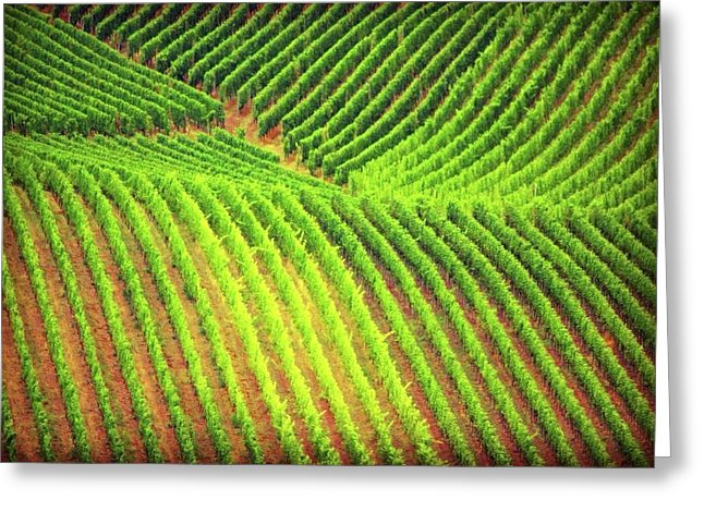 Vineyards  - Greeting Card