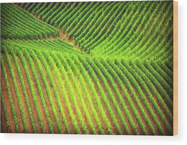 Vineyards  - Wood Print