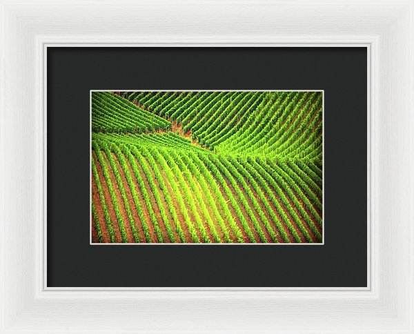 Vineyards  - Framed Print