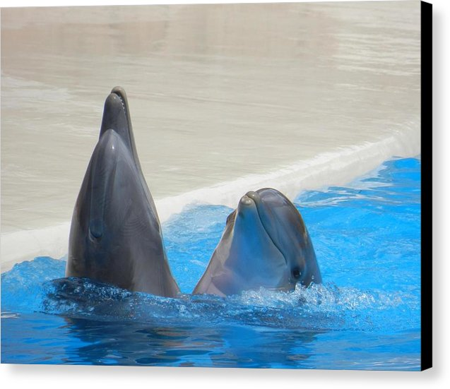When Dolphins Dance - Canvas Print