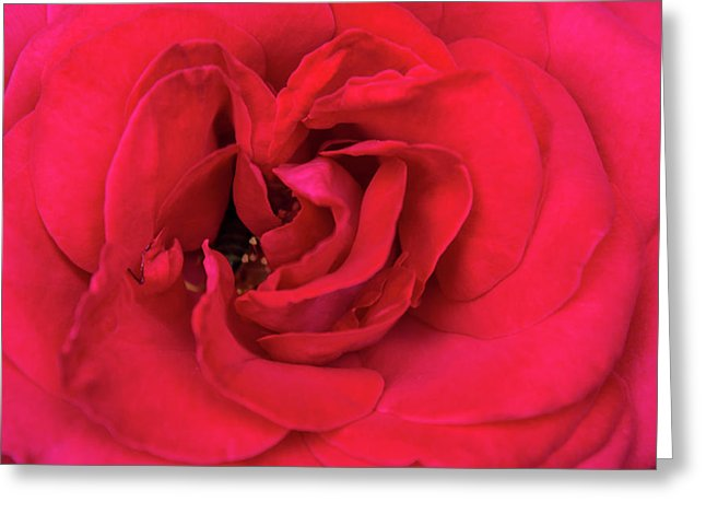 Whisper Of Passion - Greeting Card