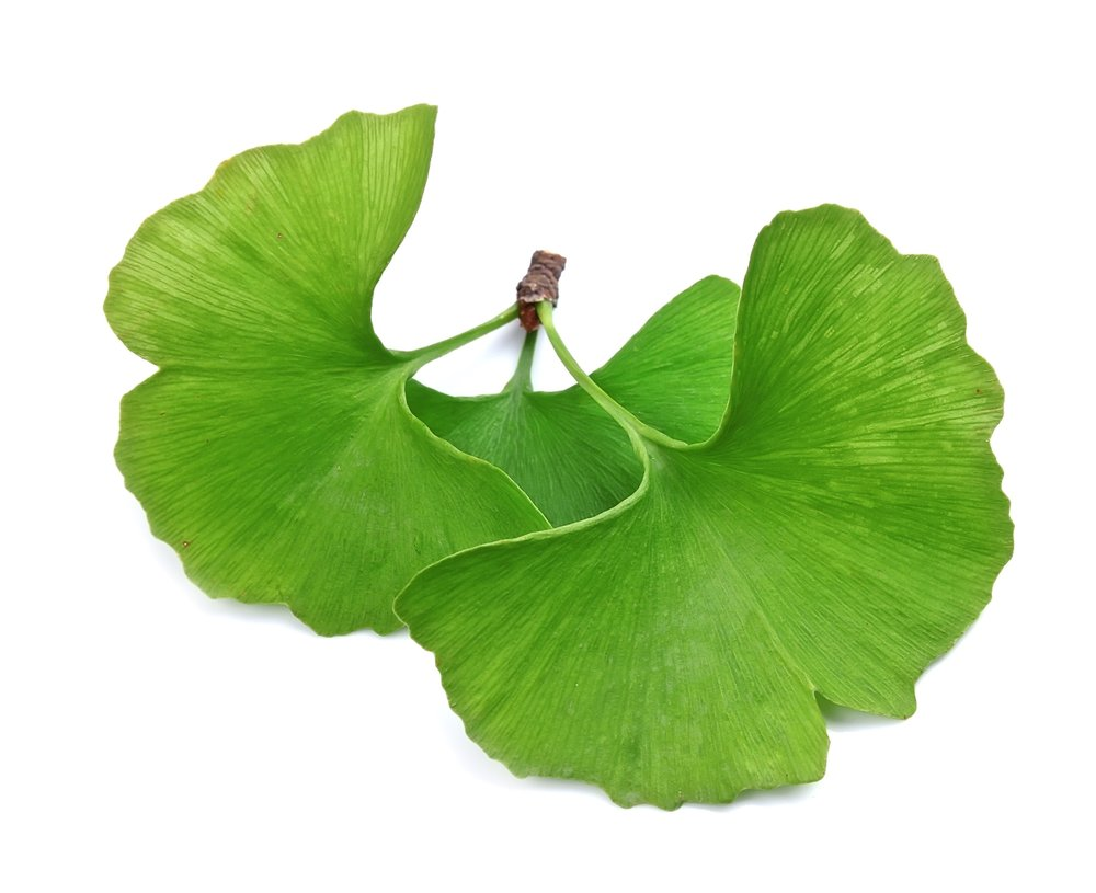 Ginkgo leaf should be the only ingredient in ginkgo biloba supplements