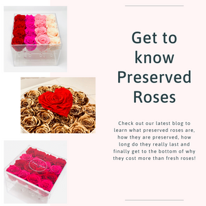 Get to know Preserved Roses