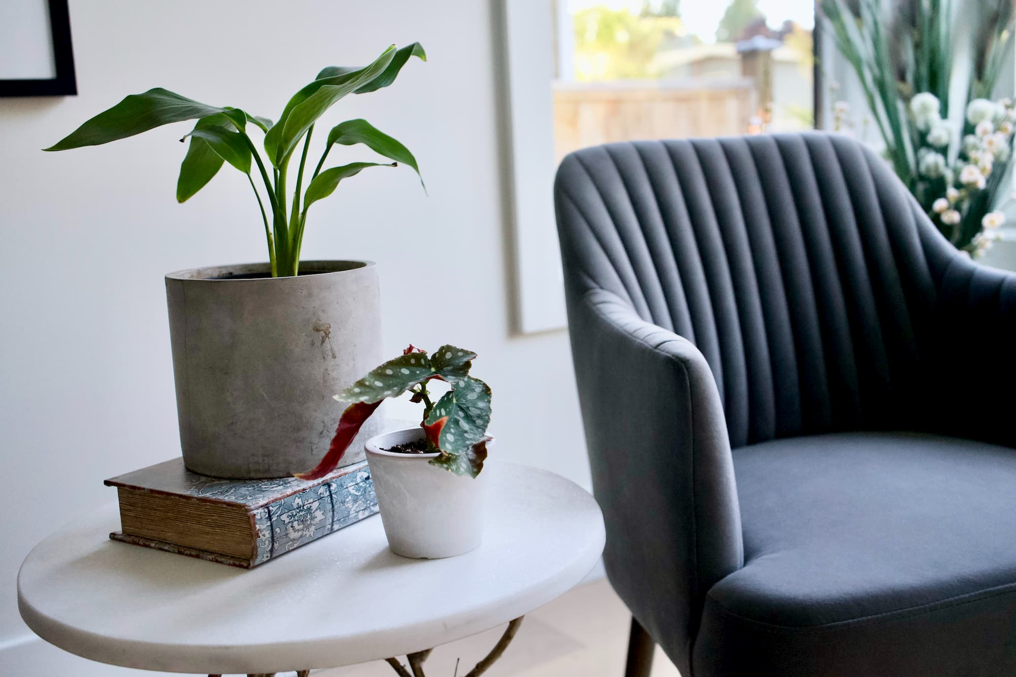 Live houseplant sits in thick old book atop round marble accent table