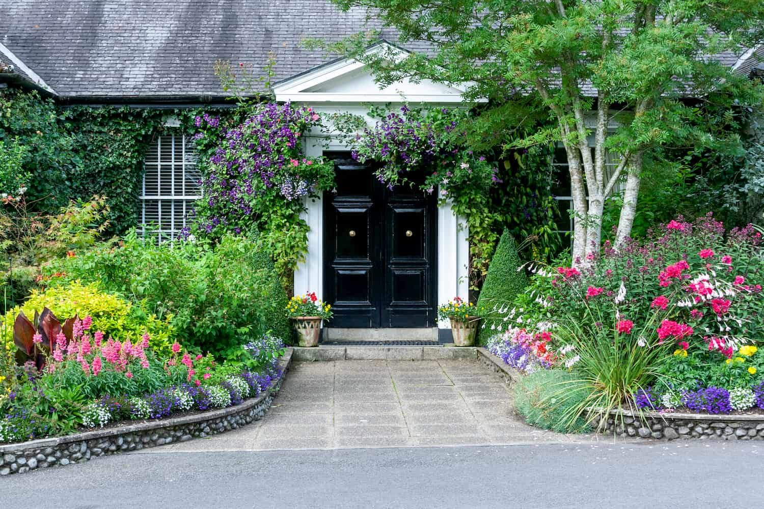 Huge, well-maintained flower bed in front of home abounds with greenery, flowering plants and bushes of all sizes