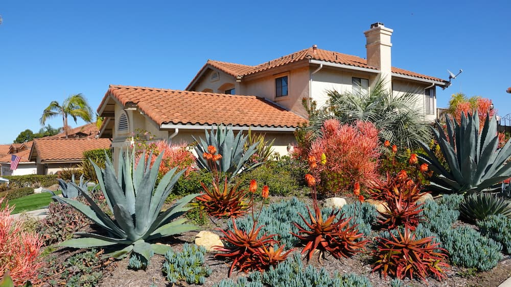 Xeriscaping Adobo