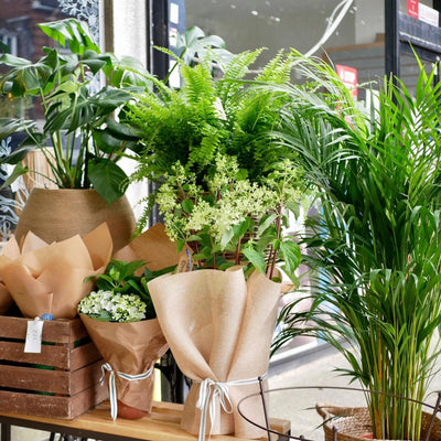 House Plants delivered to your door