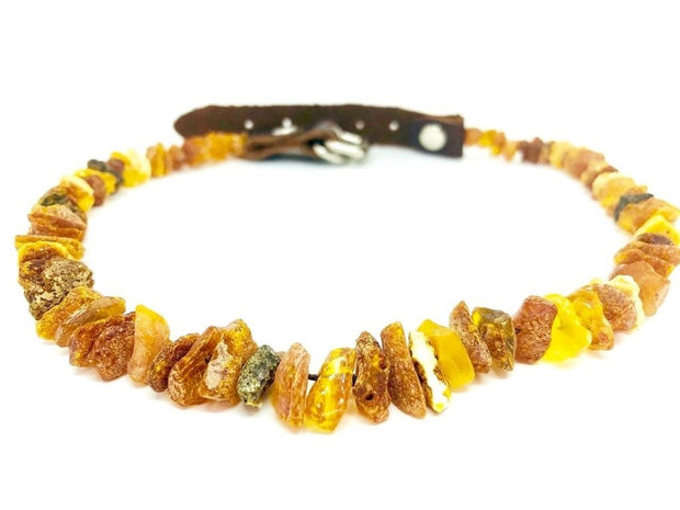 Baltic Amber Pet Collar With Leather Strap