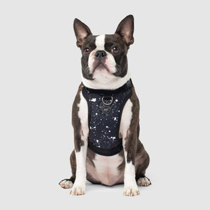 Canada Pooch Everything Harness Water-Resistant Series Splatter Harness for Dogs