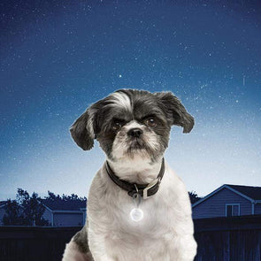 Nite Ize Petlit Collar Light for Dogs and Cats