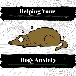 How To Help Your Dogs Anxiety