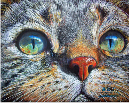 Starry Eye of Cat
