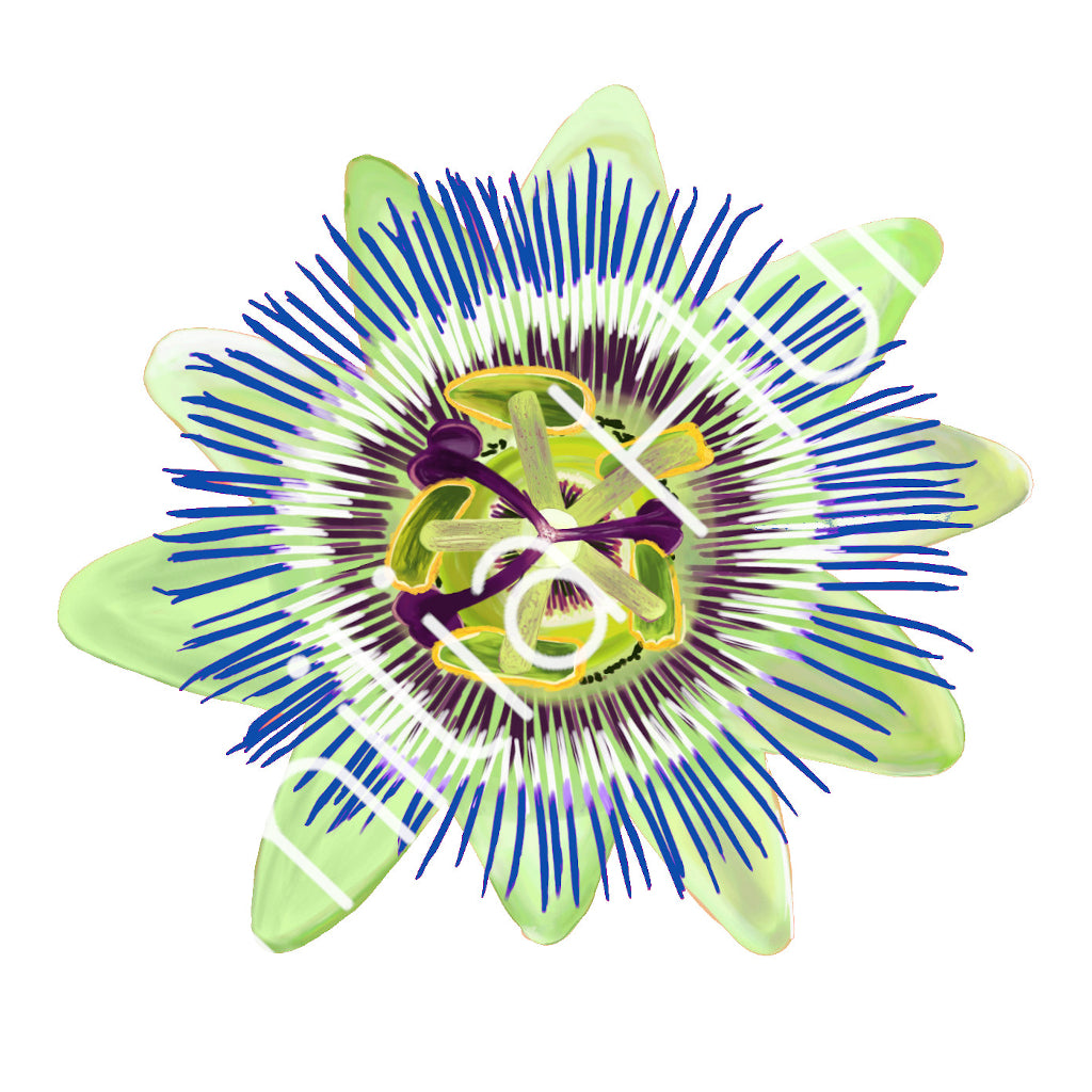 White Passion Flower Cotton Fabric - Heavy