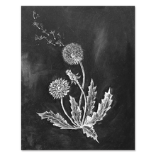 chalk drawing of dandelions