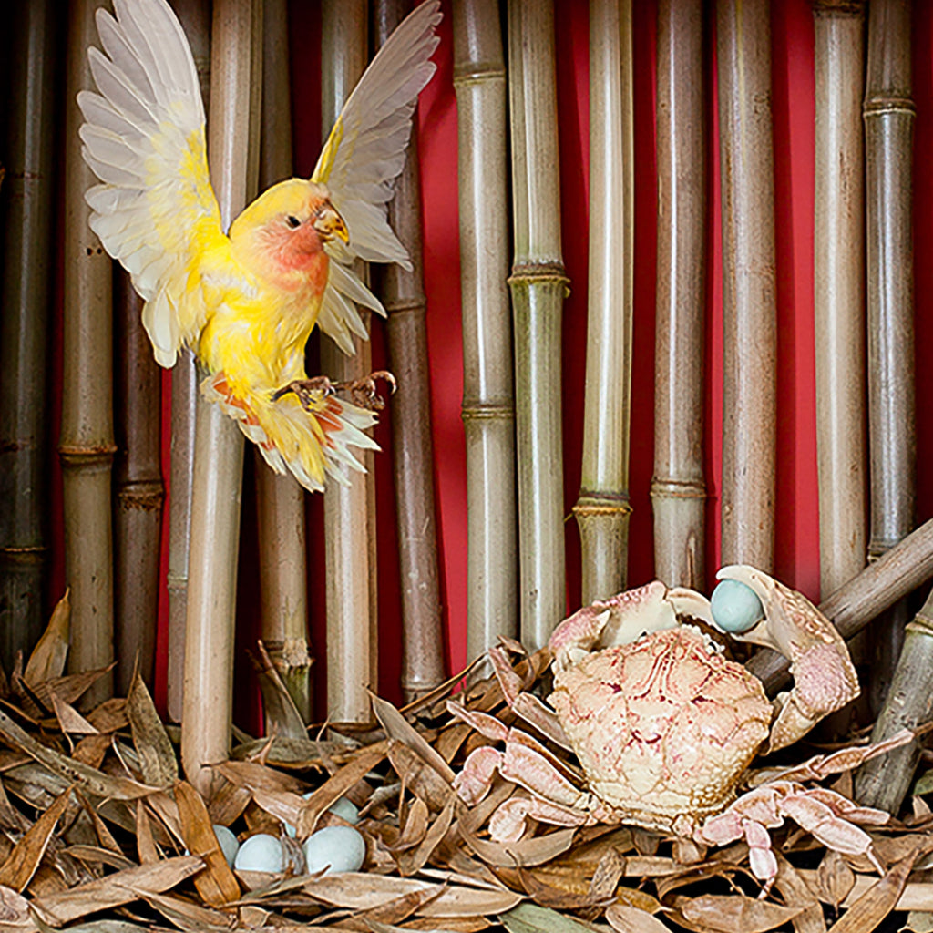 Christopher Tennant, Love Bird / Egg Thief, 2014