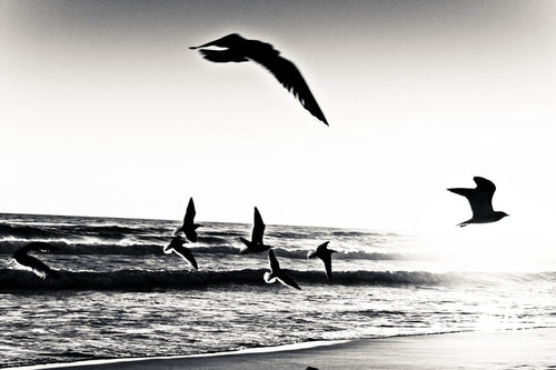 In Flight, Destin.