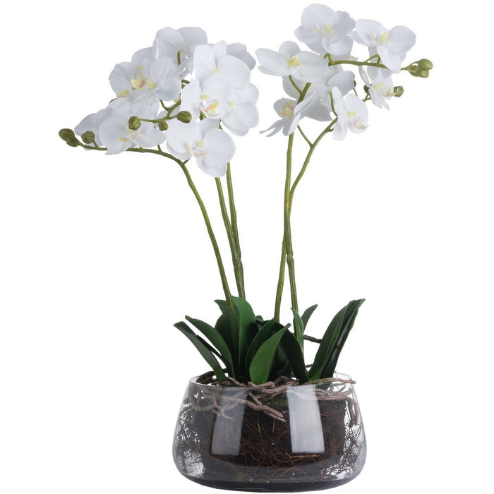 White Orchid In Glass Pot - Simply Utopia