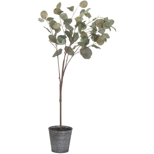 Eucalyptus Tree In Metalic Pot - Simply Utopia