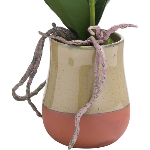 Orchid In Terracotta Glazed Pot - Simply Utopia