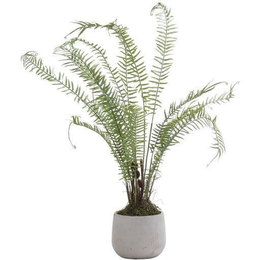 Boston Large Potted Fern - Simply Utopia