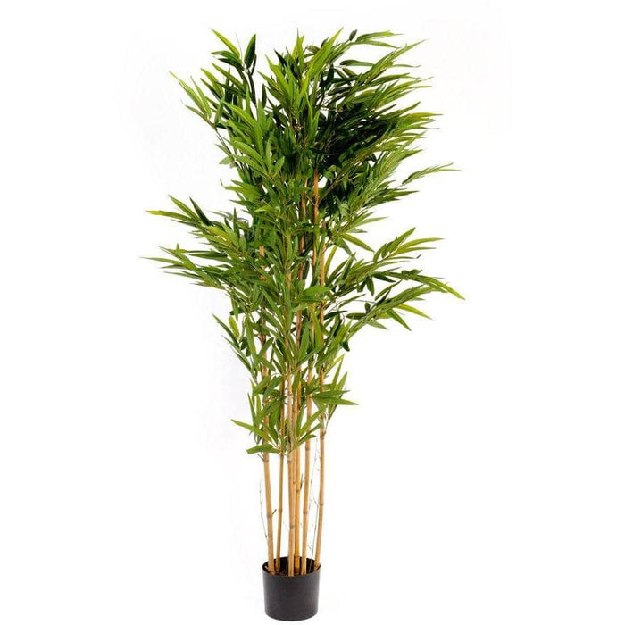 Artificial 2m Bamboo Tree - Simply Utopia