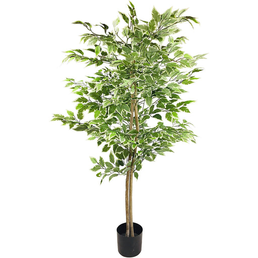 Artificial Ficus Tree With Variegation Colour Leaves 160cm - Simply Utopia