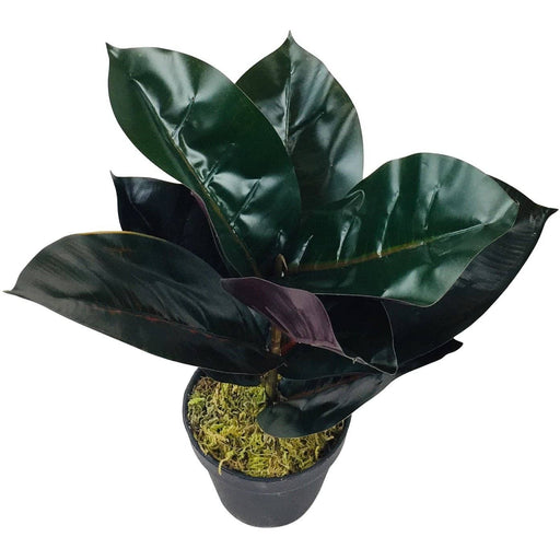 Small Artificial Rubber Plant 41cm - Simply Utopia