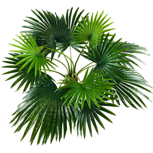 Artificial Fan Palm Tree - Simply Utopia