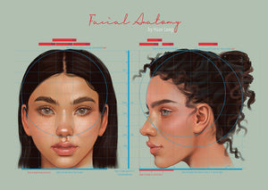 Facial Anatomy Reference Poster - Haze Long Fine Art and Resources Store