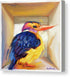Kingfisher in a box - Canvas Print
