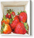 Strawberries in a box - Canvas Print