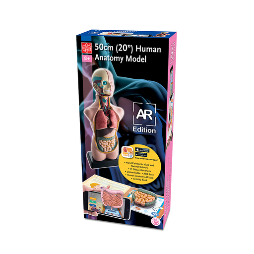 "Elenco EDU-41007 11 piece 20"" Human Anatomy Model AR Edition"