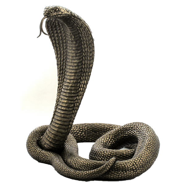 Bronze King Cobra