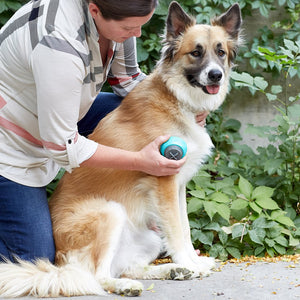 gaiam massage roller for pet working on dog