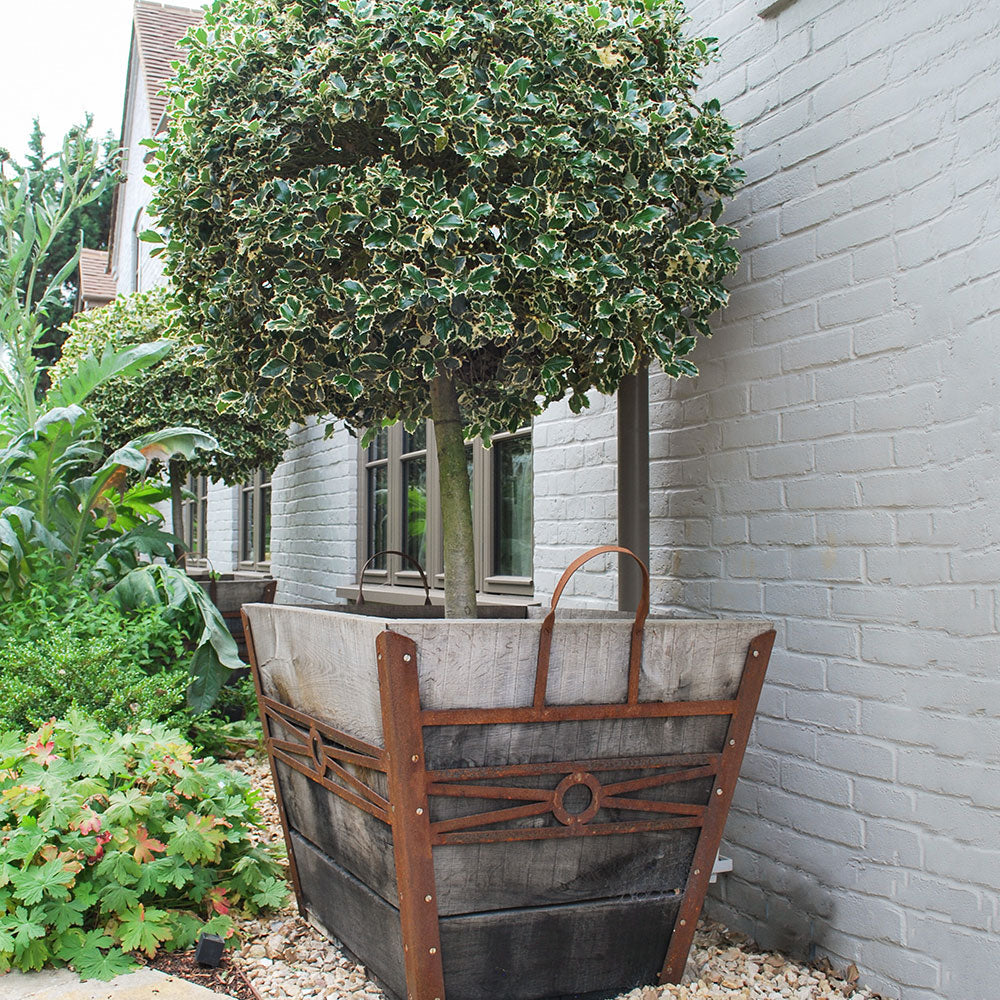 Planter - Huge Champagne Crate for Trees