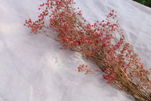 Load image into Gallery viewer, GYPSOPHILIA PRESERVED PINK