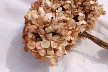Load image into Gallery viewer, HYDRANGEA SALMON