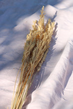 Load image into Gallery viewer, STIPA CALAMAGROSTIS NAT