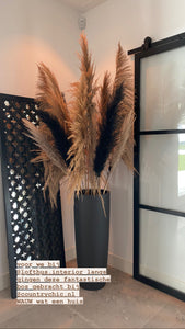 PAMPAS MIX COUNTRYCHIC