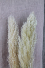 Afbeelding in Gallery-weergave laden, Cortaderia thick soft