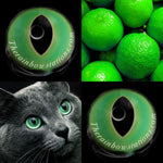 British Shorthair Green