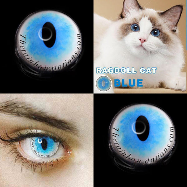 Ragdoll Cat Blue