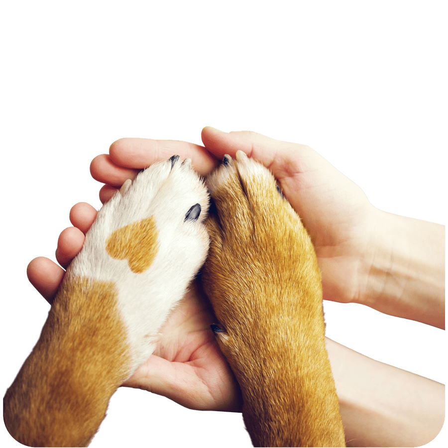 A dog paw with a heart on it holding human hands