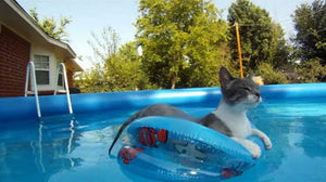 OMG Did that cat fell on the pool? - FUNNY CAT VIDEO